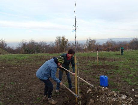 Arbre planté dans le verger de Romagnat
